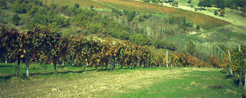 Dodiciettari Vineyards