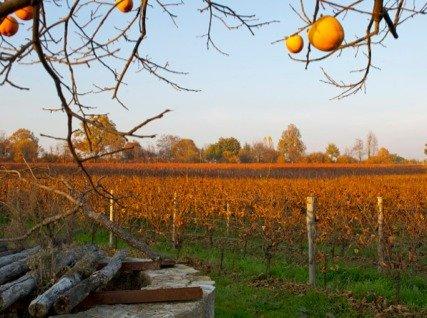 Nativ Vineyards